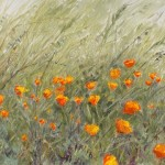 mtpalomar_poppies8x10